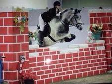 Superb Jumping/event Pony Very Talented Confidence Giver!!