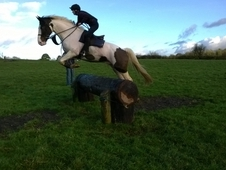 7 Year Old All Rounder For Sale