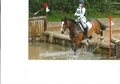 All Rounder horse - 8 yrs 15.2 hh Bay - West Sussex