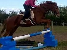 ***Twinkle Toes 13. 2hh lovely pony 5* home