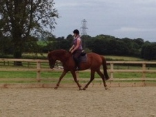 All Rounder horse - 8 yrs 16.1 hh Chestnut - Oxfordshire