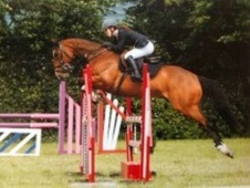 All Rounder horse - 12 yrs 15.3 hh Bay - Clwyd
