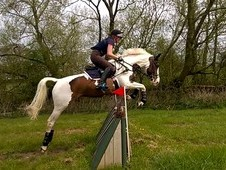 Superb eventing potential