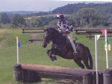 All Rounder horse - 13 yrs 13.2 hh Brown - Herefordshire