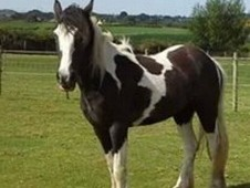 Lovely Filly For Sale