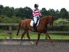Stunning All Rounder 16. 1hh Please Call Email Not Working