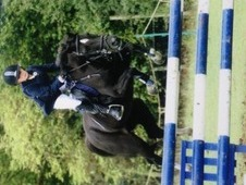Super Show Jumping Pony