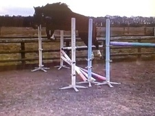 Show Jumpers horse - 4 yrs 2 mths 16.1 hh Bay - Kent