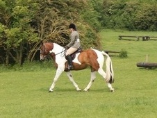 Potential Hunter And Allrounder