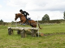 Show Jumpers horse - 9 yrs 10 mths 13.2 hh Chestnut - North Yorks...