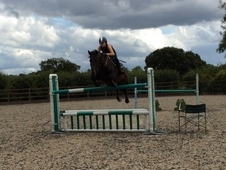 6yo Quality Show Jumper