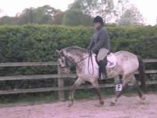 All Rounder horse - 5 yrs 14.2 hh Appaloosa - Cheshire