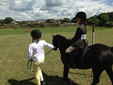 11. 2 Registered Welsh Sec A, Age 11 - Done All Pc Activities, Le...