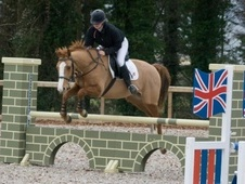 Show Jumpers horse - 9 yrs 2 mths 16.1 hh Chestnut - Wiltshire