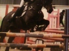 All Rounder horse - 7 yrs 14.2 hh Dark Bay - Cumbria