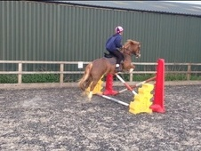 All Rounder horse - 6 yrs 13.3 hh Chestnut - Berkshire