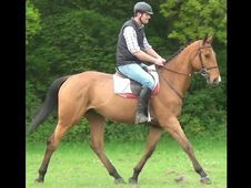 All Rounder horse - 5 yrs 0.0 hh  - Hampshire
