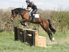 All Rounder horse - 7 yrs 1 mth 15.0 hh Bay - West Yorkshire