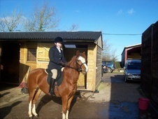 All Rounder horse - 7 yrs 1 mth 13.0 hh Chestnut - Somerset