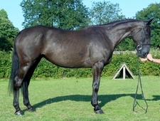 A Classey Mare With A Great Temperament