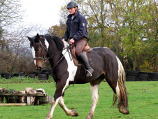 Stunning 16. 3hh Colored gelding for sale