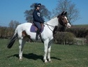 All Rounder horse - 12 yrs 1 mth 16.0 hh Coloured - Cambridgeshire