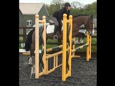 All Rounder horse - 6 yrs 15.3 hh  - Hampshire