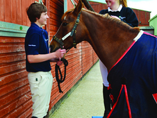Equine Courses At Merrist Wood College