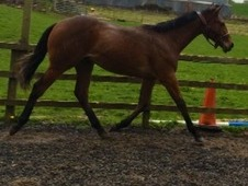 Top Potential Competition Horse