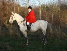 Hunters horse - 9 yrs 16.2 hh Grey - County Durham