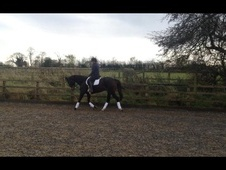 All Rounder horse - 12 yrs 1 mth 15.3 hh Bay - North Yorkshire