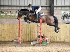 ***REDUCED*** Swedish Showjumper