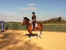 All Rounder horse - 8 yrs 15.1 hh Tri-Coloured - Gloucestershire