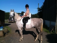 Arabs horse - 9 yrs 15.0 hh Dapple Grey - Kent