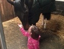 All Rounder horse - 4 yrs 6 mths 15.2 hh Coloured - Suffolk