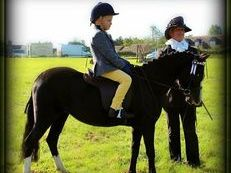 11.2hh 7yr old  Black welsh Mare