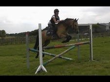 * Reduced *sj/whp 13. 2 Buckskin Mare