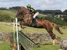 Talented Event/sj/ Whp/hunting Pony