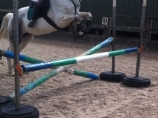 All Rounder horse - 11 yrs 1 mth 15.3 hh Grey - Wiltshire
