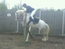 All Rounder horse - 10 yrs 14.0 hh Grey - Essex