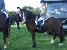 Pony Club Ponies horse - 13 yrs 13.2 hh Bay - County Durham