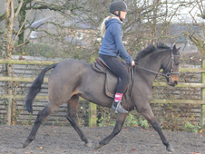 12hh Lead Rein/first Ridden Show Pony