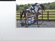 Stunning Mare For Sale