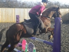All Rounder horse - 11 yrs 13.2 hh Chestnut - Wiltshire