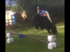 *for Sale* Beautiful 13. 1hh Black Mare