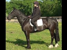 All Rounder horse - 7 yrs 15.2 hh  - Hampshire