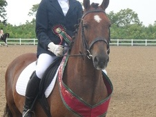 All Rounder horse - 12 yrs 11 mths 14.0 hh Liver Chestnut - Derby...