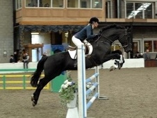 All Rounder horse - 7 yrs 5 mths 16.2 hh Black - County Durham