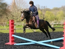 13. 1hh pretty forward going 2nd pony