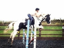 16. 1hh, 5 Year Old Showjumper/all Rounder/eventer